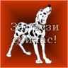 Собака далматин