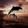 Дельфины полуночники