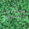 Зеленая трава