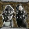 Миссия Дарвина - Агенты Бластер и Хуарес готовы