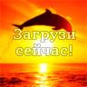 Дельфин в лучах солнца на закате