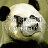 Косая панда